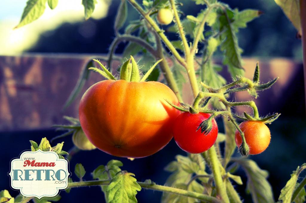 Es una de las habilidades que mas admiro. Saber cultivar tu propia comida es genial.
